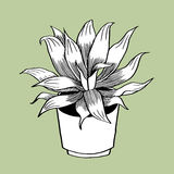 Long leaves and Pot. This is line art, Created form my hand drawn Stock Photos