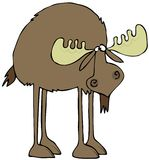 Long legged moose. This illustration depicts a long legged moose with its head hung low Stock Photography