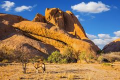 Long-legged Oryx antelope. Travel to Africa. Picturesque stones in the Spitzkoppe desert. The concept of active, extreme and photo. Tourism stock photography