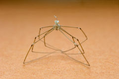 Long legged spider in closeup Stock Photography