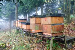Bee hives. A long line of wood bee hives at the beginning of autumn stock images