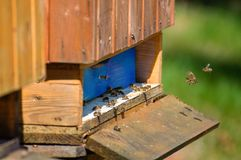 Bee hives. A long line of wood bee hives at the beginning of spring stock images