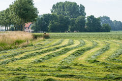 Long lines and curves of raked grass Royalty Free Stock Photo