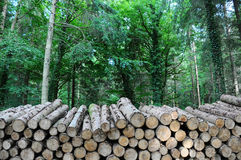 Long log pile Stock Photo