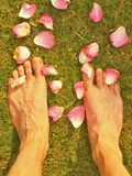 The long male legs stay between fallen rose petals on short dry grass Stock Photo