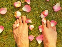 The long male legs stay between fallen rose petals on short grass Stock Images