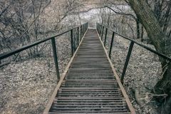 Long metal ladder, steps in the park with fallen brown leaves away. Late autumn. Concept of autumn, nostalgia, ways royalty free stock photography