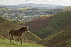 Long mynd foal Stock Photo