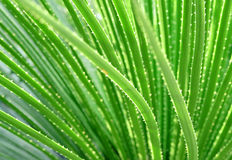 Long narrow green leaves Royalty Free Stock Photography