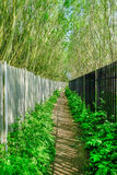 Long narrow passage with fence and railings. And tall trees on each side.  A Springtime shot in Abridge, Essex Royalty Free Stock Photo