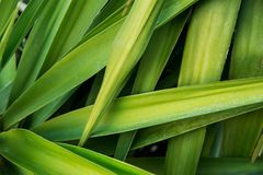 Long Narrow Spiky Interwoven Palm Tree Leaves Tropical Foliage Pattern. Poster Banner Template Background. Exotic Vacation Tourism. Wanderlust Concept Stock Photography