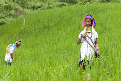 Long Neck Karen working on paddy-field Stock Images