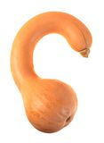 Long neck pumpkin crookneck squash Royalty Free Stock Images