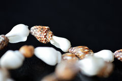 Long necklace of seashells on a dark background Royalty Free Stock Image