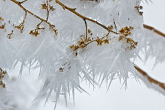 Long Needles of Ice On Winter Trees Royalty Free Stock Photography