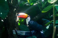 Long Nose Bird royalty free stock images