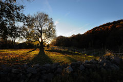 Long oak shadows. The sun setting behind an old oak during the autumn in Ostergotland, Sweden Royalty Free Stock Images