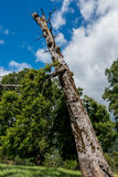 Long old tree. A long old tree keep stand near a forest on a cloudy day Royalty Free Stock Photo