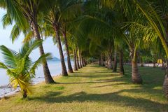 Long palm grove Royalty Free Stock Photo