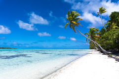 Long palm tree on a tropical white beach on a deserted island Stock Photos