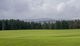 Coast Range Panorama. A long panorama of fall grassland in front of a line of fir trees with Oregon`s coast range in the background stock photo