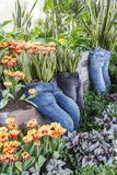 Long pants used as planters with Sansevieria, tulips and various foliage plants royalty free stock image