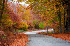 Long path of autumn colors Royalty Free Stock Image