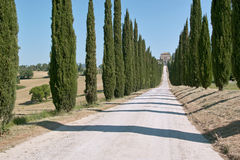 Long path lined with cypresses Royalty Free Stock Photo