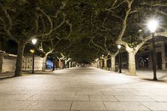 Long path street lined with green trees at night in spain royalty free stock images