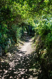 Long path in the summer fresh shade under green foliage Stock Photography