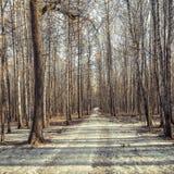 Long path. Stock Image
