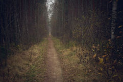 Long pathway leading through late autumn forest Stock Photo