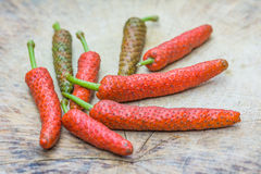 Long pepper Stock Image