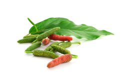 Long pepper or Piper longum isolated on white background Stock Image