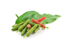 Long pepper or Piper longum isolated on white background Royalty Free Stock Photo