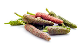 Long pepper or Piper longum Stock Photo