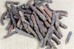 Long pepper Piper longum. A macro photo of Long pepper Piper longum Stock Photography