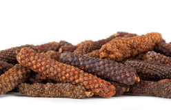 Long pepper or Piper longum Stock Photos