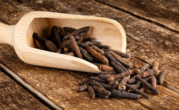 Long pepper or Piper longum Stock Image