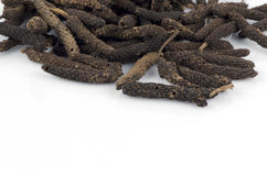 Long pepper (Piper retrofractum Vahl). Royalty Free Stock Photography
