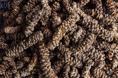 Long pepper Royalty Free Stock Photo