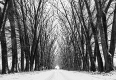 Long perspective road. Winter scenic background. Big old frozen trees silhouettes on magic way Stock Photo