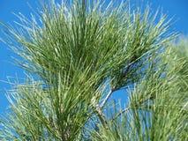 Long pin d'aiguille contre le ciel bleu Images libres de droits