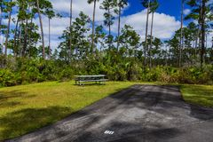 Long Pine Key Campground, Everglades. A campsite in Long Pine Key Campground in Everglades National Park in Florida, United States royalty free stock images