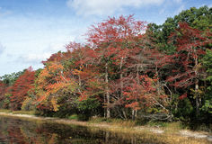 Long Pond - Southampton, NY. Pond edge with red, green and orange fall foilage , Southampton, New York Stock Images