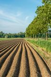 Long potato ridges in a Dutch polder. The ridges have been grounded after the mechanical planting of the potatoes to protect the roots and the newly growing Royalty Free Stock Photo