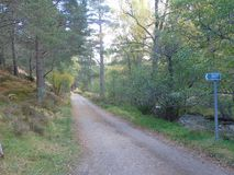 Long public road leads into the woods of different coloured green near Aviemore. Muddy road leads woods near Aviemore different coloured green stock image