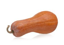 Long pumpkin Royalty Free Stock Photo