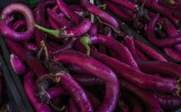 Long purple brinjal or eggplant selling at market. Venice, Italy - september 2016: Rialto fish markets. Close Up, Shallow DOF. Long purple brinjal or eggplant Stock Photo