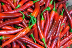 Long red chile peppers -- Capsicum annuum Amando Stock Images